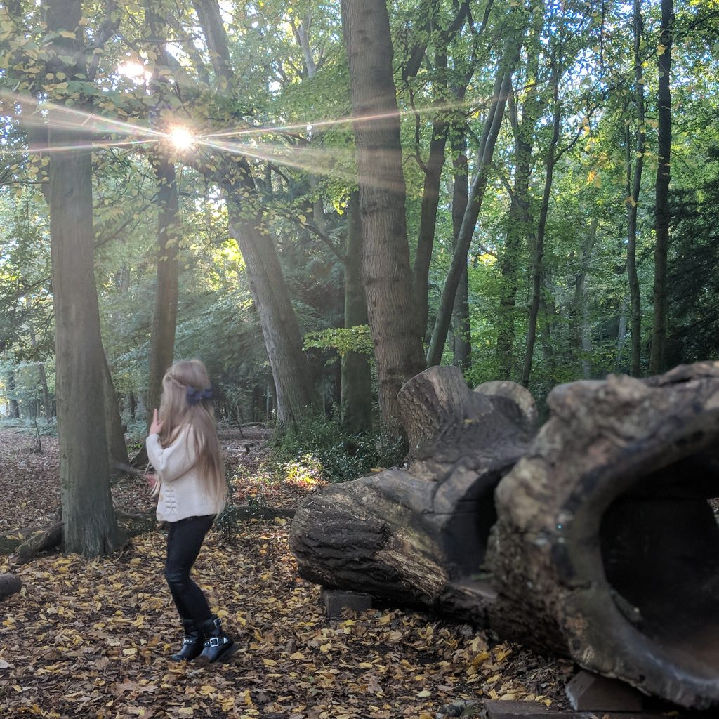 Wild Walks   Leigh Woods National Nature Reserve