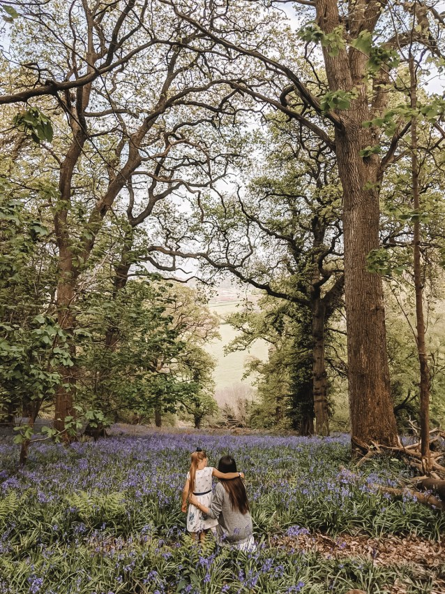 Wild Walks | Forest Bathing In the Sea of Bluebells 2