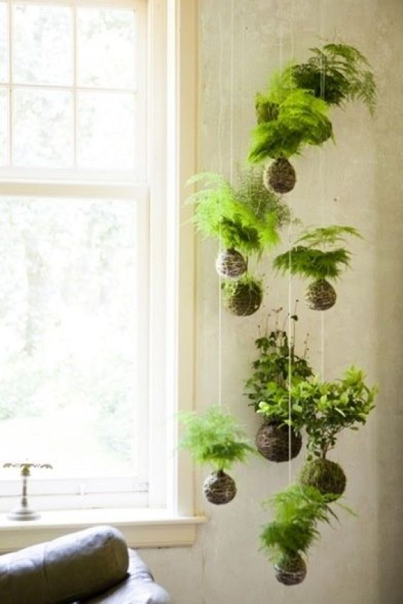 Green Living | The Joy of Plants - Creating Urban Jungle at Home 5