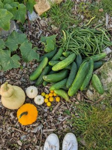 Green Living | My First Year on The Allotment 161