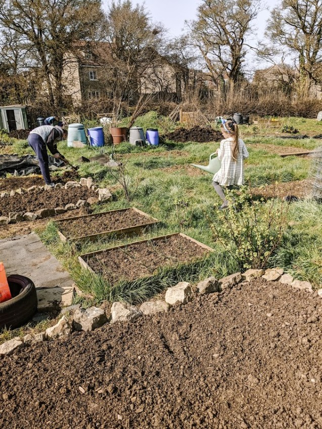 Green Living | My First Year on The Allotment 11
