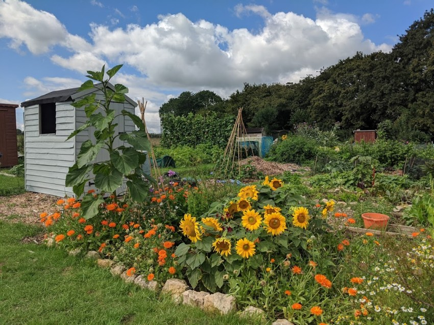 Green Living | My First Year on The Allotment 153