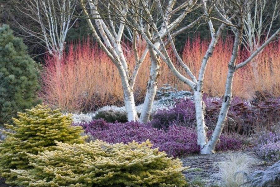 beau jardin en hiver