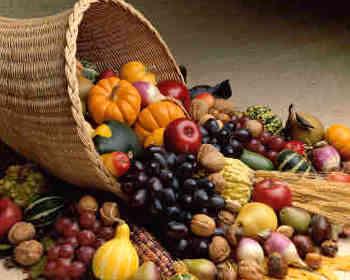L'agroforesterie tropicale ou le miracle de l'abondance pour tous sans effort