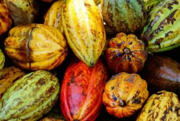Tout savoir sur le chocolat, un produit 100% mexicano ! (Video)