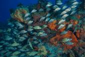 Un système d'assurance pour protéger les récifs coralliens de Cancún !