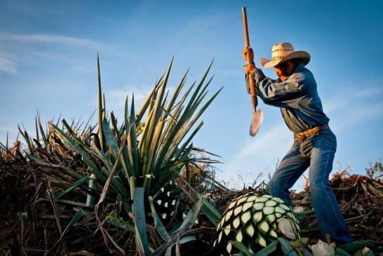 Aïe, Aïe, Aïe Tequila : l'emblématique boisson a son musée à Mexico ! (Video)