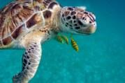 Devenez éco-plongeur dans la réservedeSian Ka'anau Mexique !