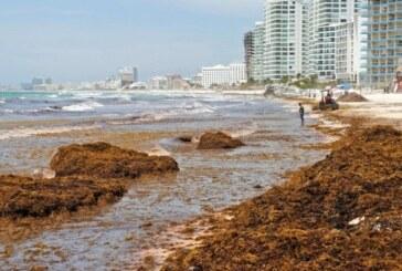Algues sargasses, le cauchemar de Quintana Roo continue ! (video)
