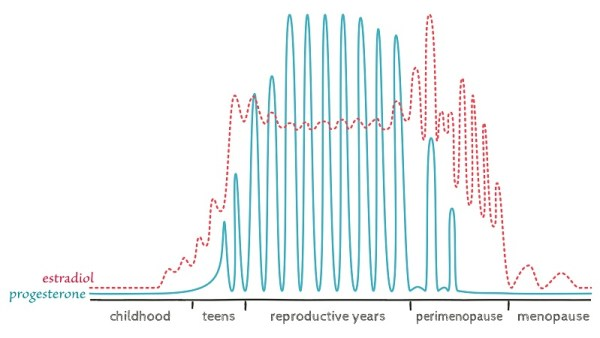 ovarian hormones through the lifespan