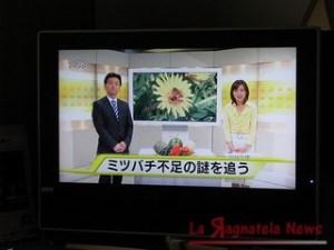 televisione stranieri