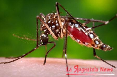 Virus_Zika_Utah
