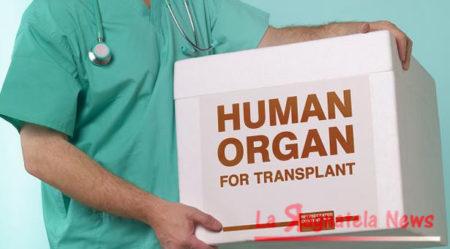 Obbligo donazione organi in Colombia