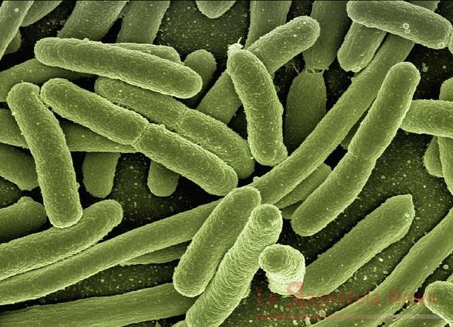 Legionella: salgono a 42 le persone contagiate, 2 nuovi casi