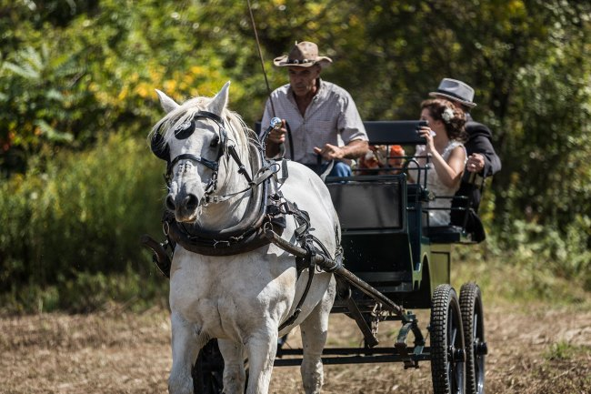 The bride arrives at her farm wedding ceremony in a horse and carriage