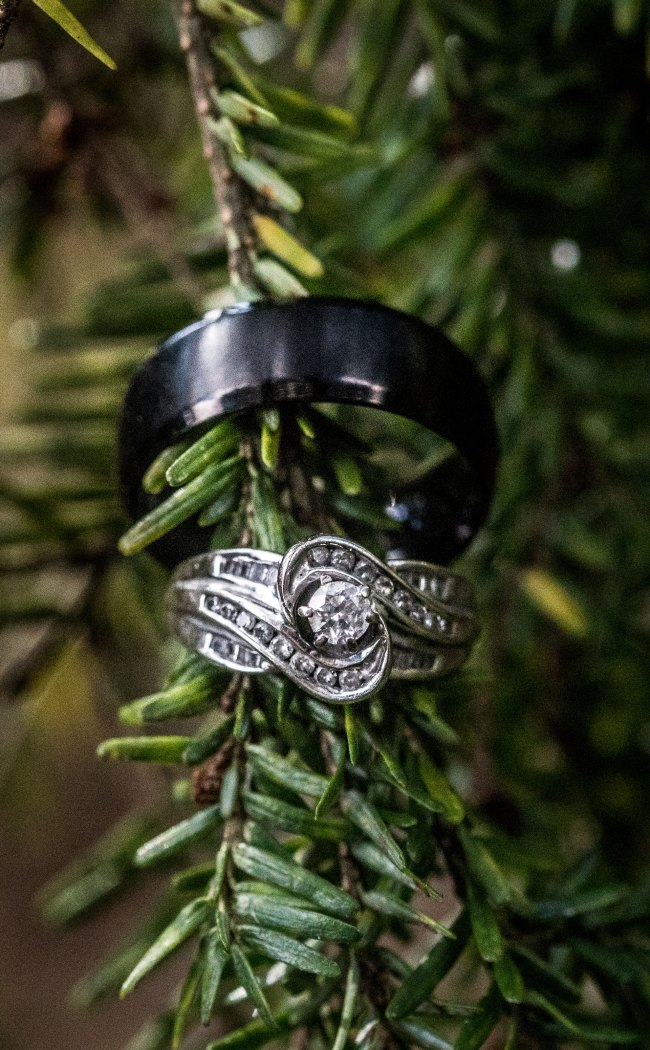 wedding rings on evergreen branch