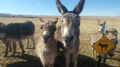 our-animals-donkeys