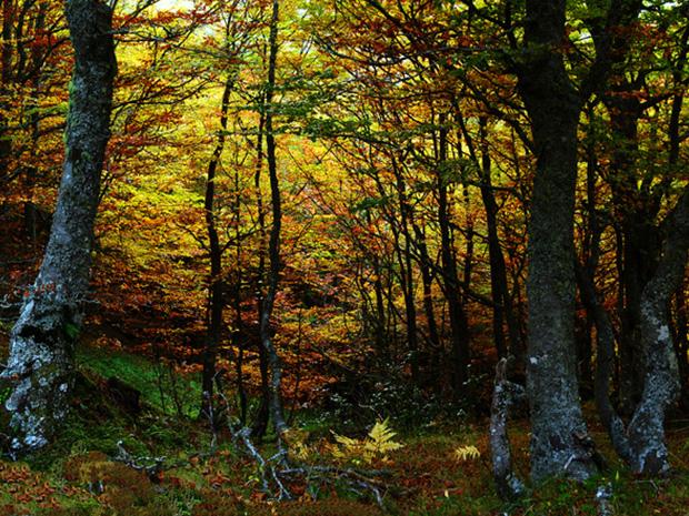 Hayedo Montegrande - casa rural L'Arboleu Asturias Teverga