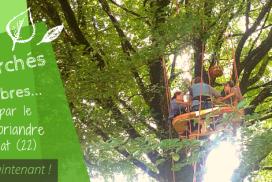 Repas perchés dans les arbres au resto Coriandre à Trémargat – 2019