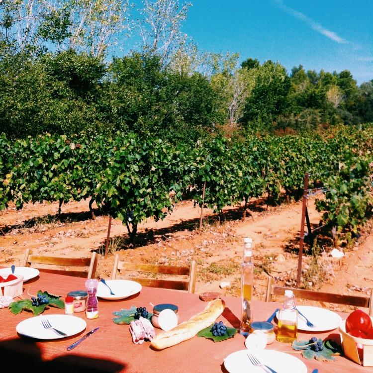 pique-nique-dans-les-vignes-vaucluse-ventoux