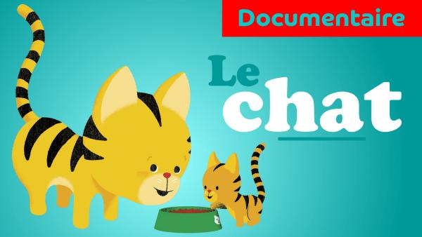 le chat documentaire animalier pour maternelle