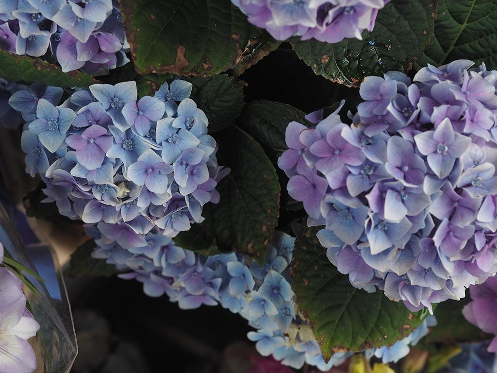gunns-florist-Brighton-15