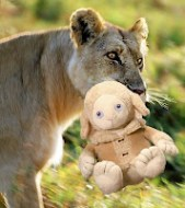 Another LIONs for LAMBs Reminder