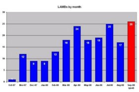 LAMB Report #7