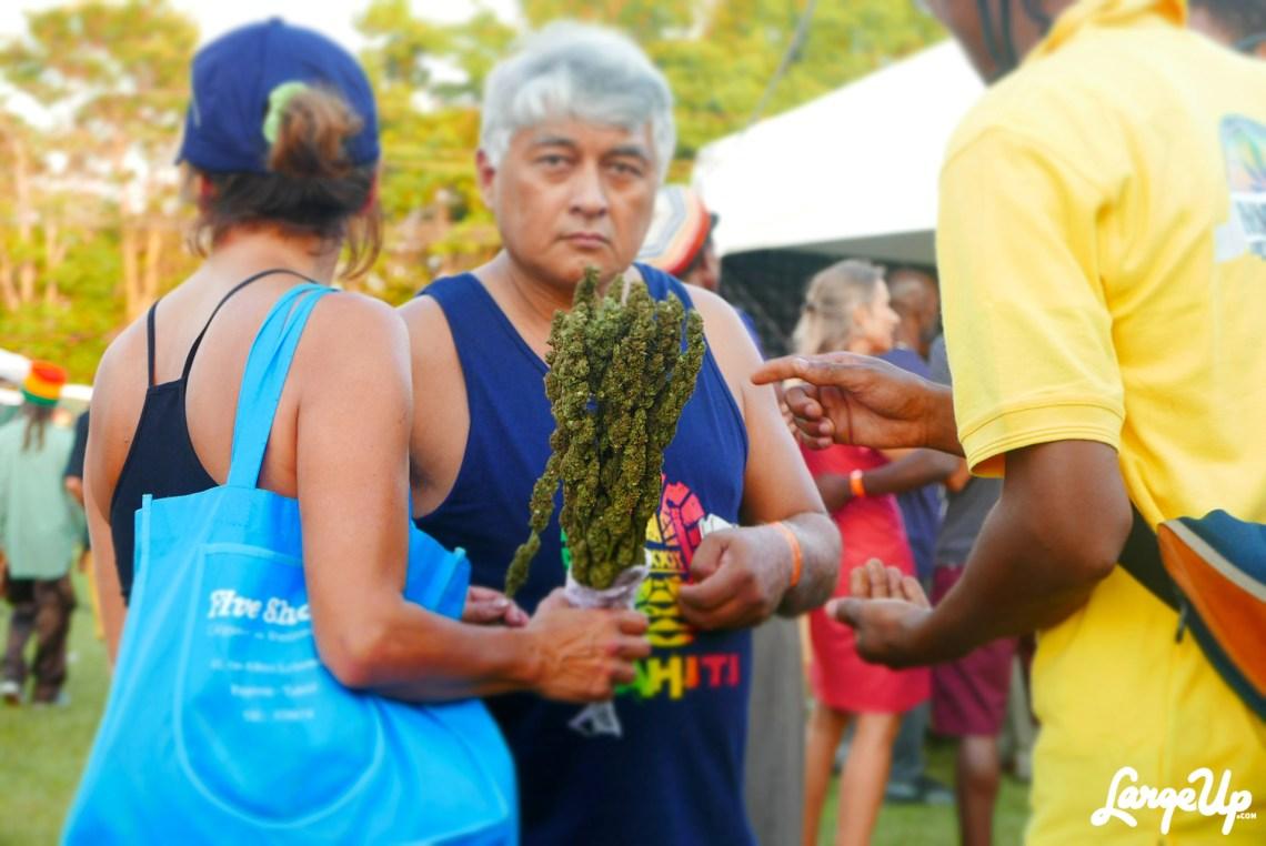 jamaica-cannabis-cup-19