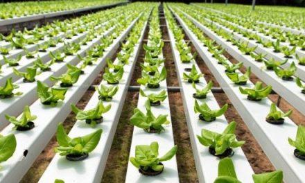Posgrado extracurricular sobre producción agroecológica