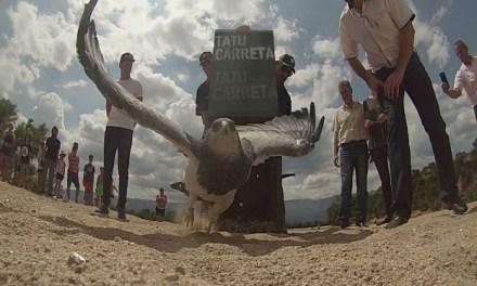 Policía Ambiental liberó 700 aves silvestres en la provincia