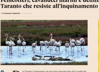 Fenicotteri e cavallucci marini, il Sole24 Ore esalta la bellezza di Taranto