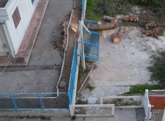 Il vento abbatte un pino secolare, allarme a Taranto. L'appello degli agronomi