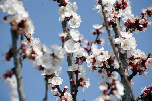 Άνοιξη: Πώς προλαβαίνουμε τις αλλεργίες που… έρχονται