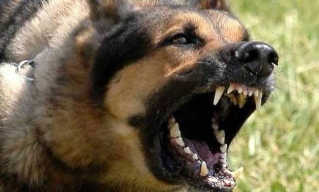 Σοκ: Σκύλος δάγκωσε δύο μικρά παιδιά