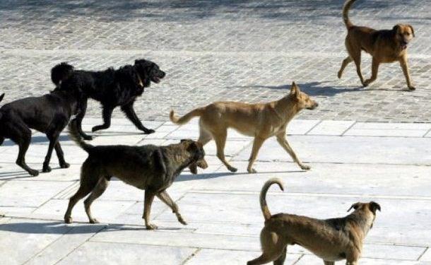 Αγιόκαμπος: Αδέσποτα προκαλούν φόβο στους παραθεριστές