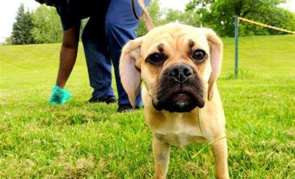 Χωρίς σταματημό οι βανδαλισμοί στα κουτιά για σκύλους στη Λάρισα
