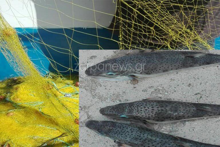 Ψαριά γεμάτη λαγοκέφαλους – «Δείτε πως έκαναν τα δίχτυα» [pics]