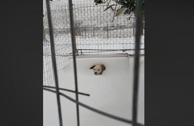 Εξοργιστικό: Άφησαν σκύλο δεμένο μέσα στο χιόνι