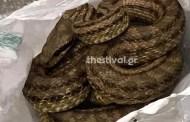 Φίδι προκάλεσε αναστάτωση σε εστιατόριο - ΦΩΤΟ