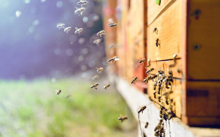Πώς οι Ινδοί προστατεύουν τα τρένα τους με τον ήχο από μέλισσες
