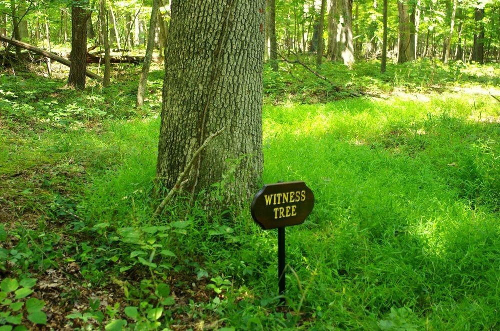 Τα «δέντρα-μάρτυρες» του αμερικανικού Εμφυλίου!