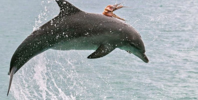 Ζώα που… βαριούνται να μετακινηθούν!