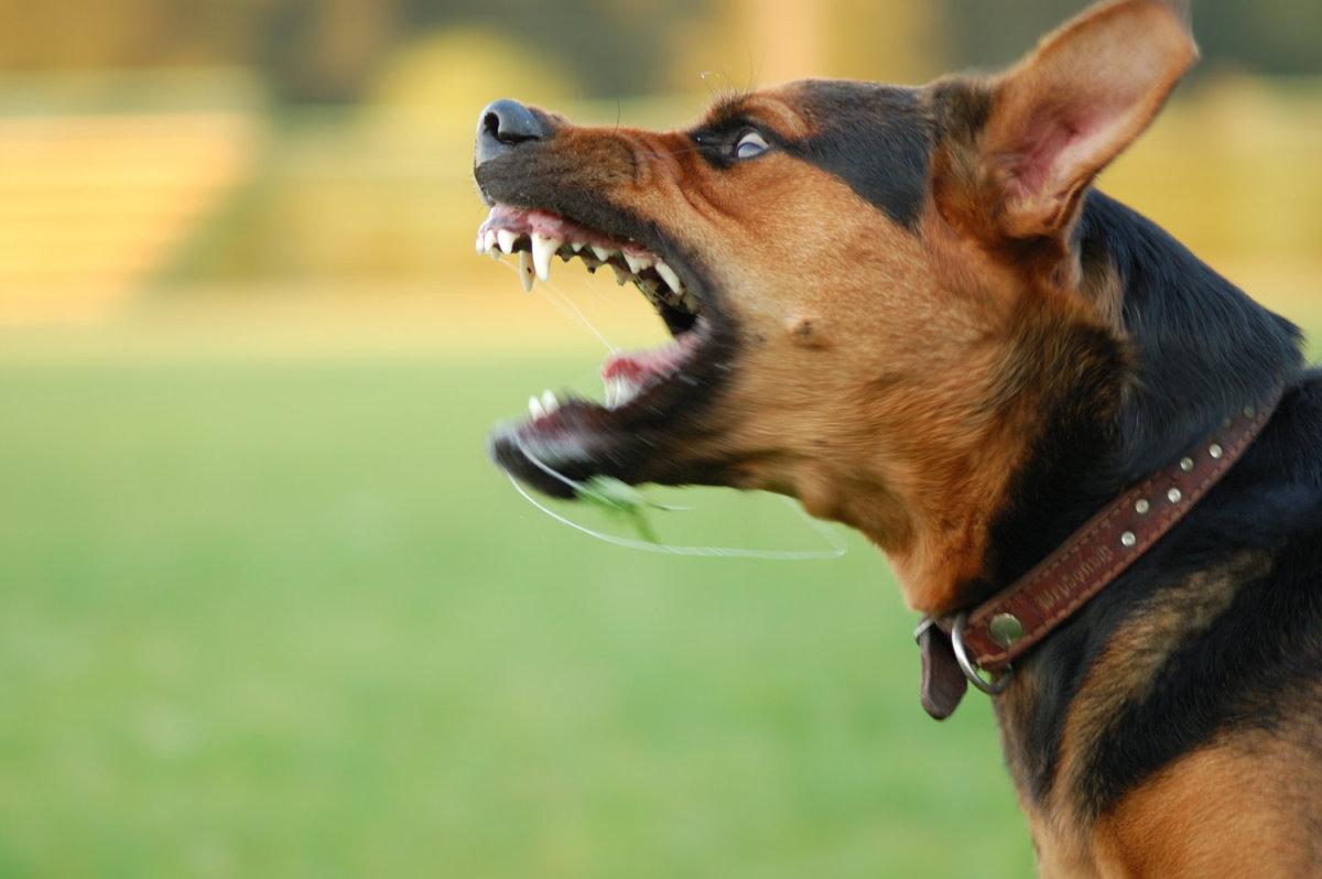 Βόλος: Δύο θύματα επιθέσεων αδέσποτων σκύλων σε λίγη ώρα - Στο Νοσοκομείο δύο γυναίκες