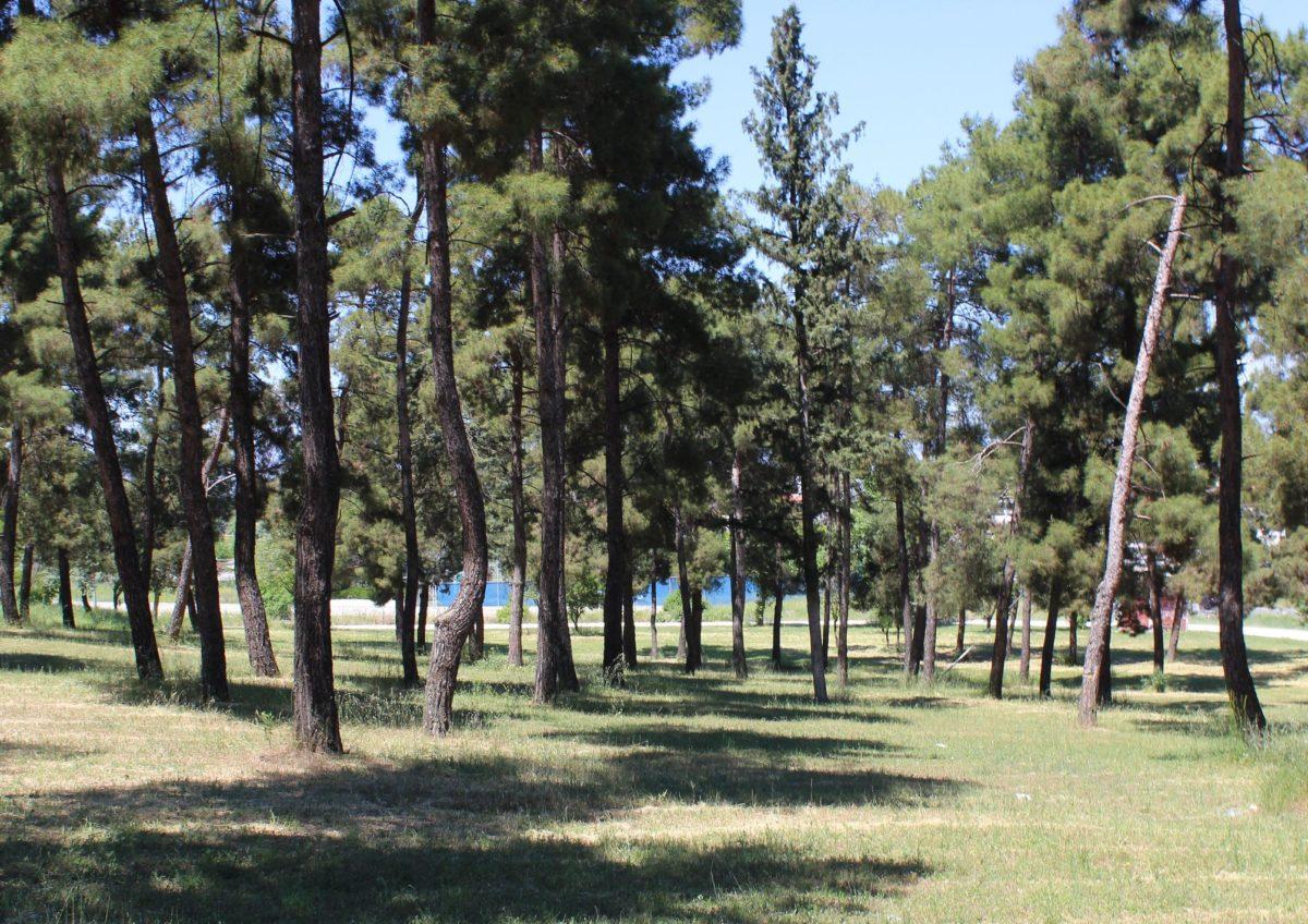 Τα 450 στρέμματα μέσα στη Λάρισα που θυμίζουν ευρωπαϊκή πόλη του βορρά – Δείτε ΦΩΤΟΓΡΑΦΙΕΣ