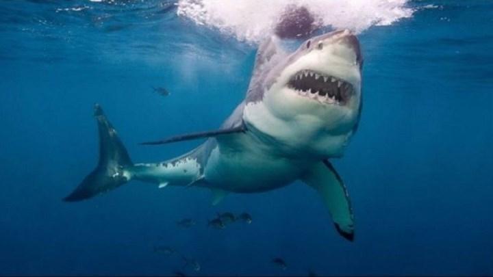 Λευκός καρχαρίας κατασπάραξε 15χρονο σέρφερ - Του επιτέθηκε δύο φορές