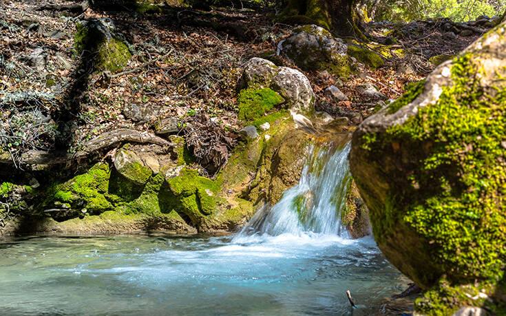 Το δάσος Ρούβα στην Κρήτη με την ευρωπαϊκή πρωτιά