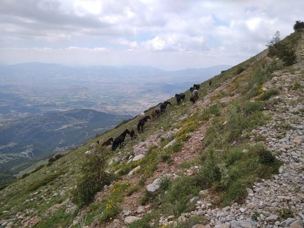 Ανάβαση στον Όλυμπο με άλογο - Ξενάγηση στο βουνό των θεών