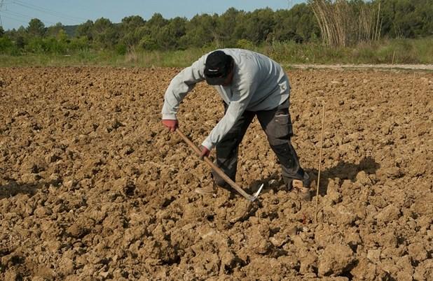 Ενεργοποιείται η πλατφόρμα για την μετάκληση εργατών γης - 2.300 στην Π.Ε. Λάρισας