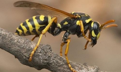 Πέθανε 61χρονος από τσίμπημα σφήκας